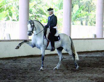 foto caballo maria fernanda escalera: