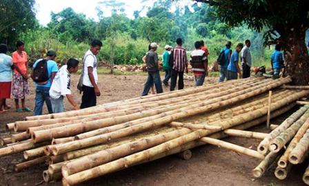 Bolsa de noticias managua nicaragua - Cultivo del bambu ...
